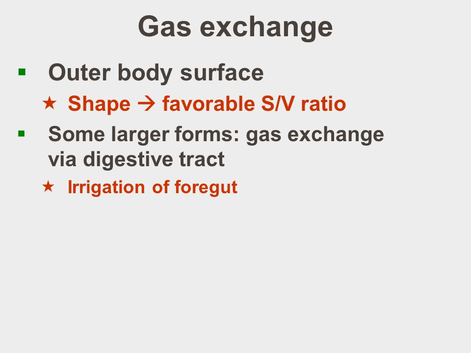 Gas exchange Outer body surface Shape  favorable S/V ratio