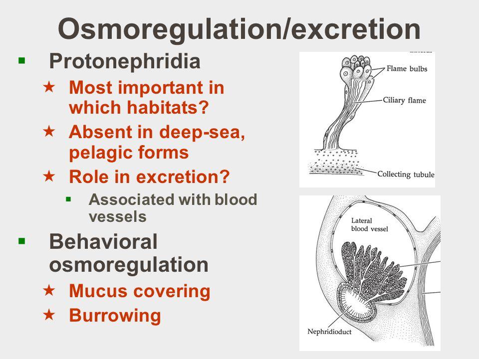 Osmoregulation/excretion