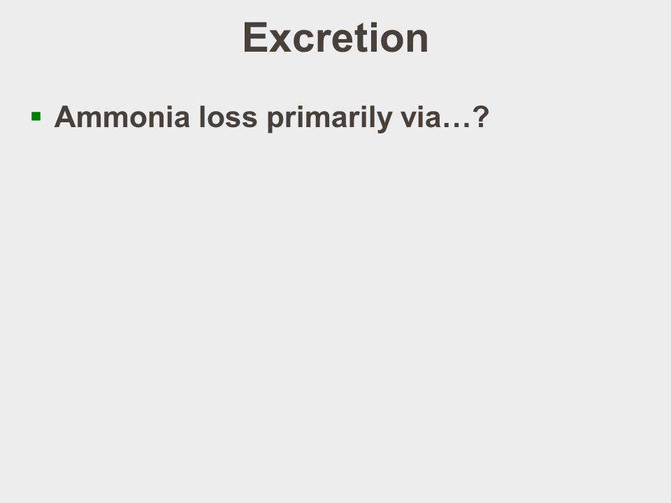 Excretion Ammonia loss primarily via…