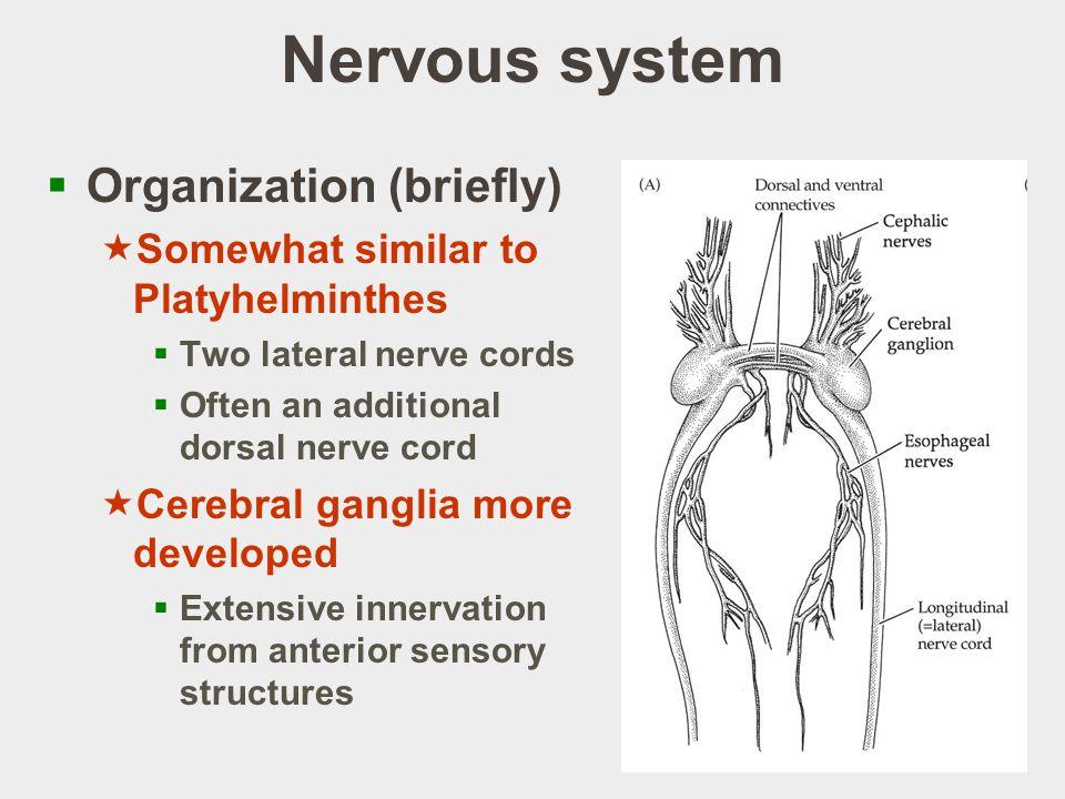Nervous system Organization (briefly)