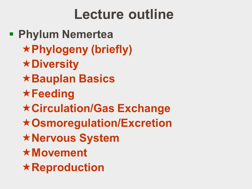 Lecture outline Phylum Nemertea Phylogeny (briefly) Diversity