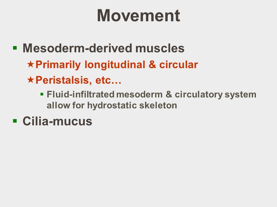 Movement Mesoderm-derived muscles Cilia-mucus