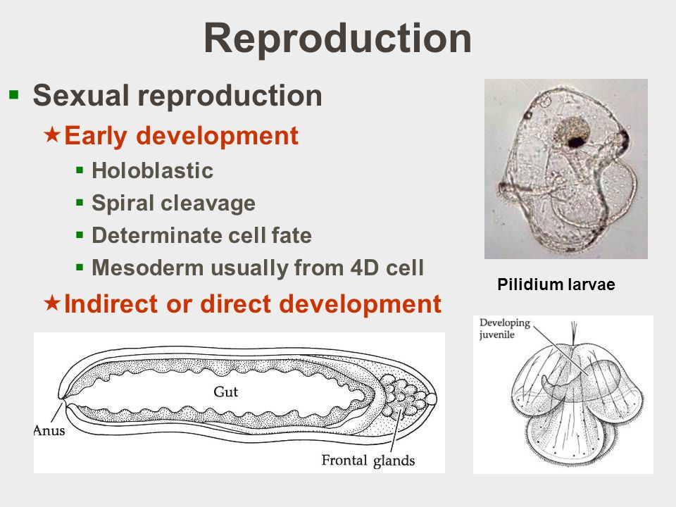 Reproduction Sexual reproduction Early development
