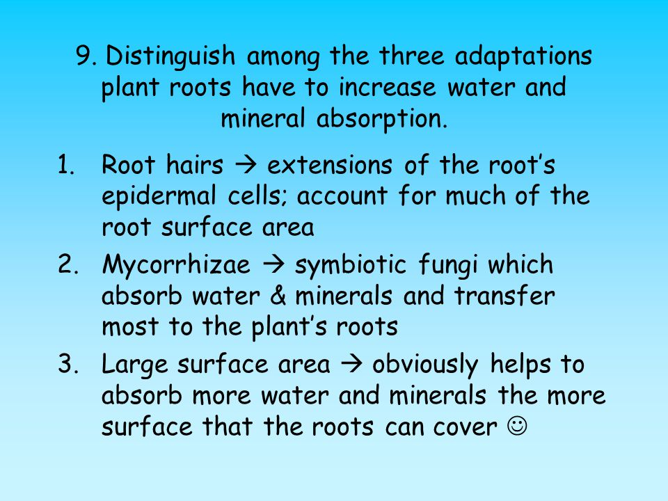 9. Distinguish among the three adaptations plant roots have to increase water and mineral absorption.