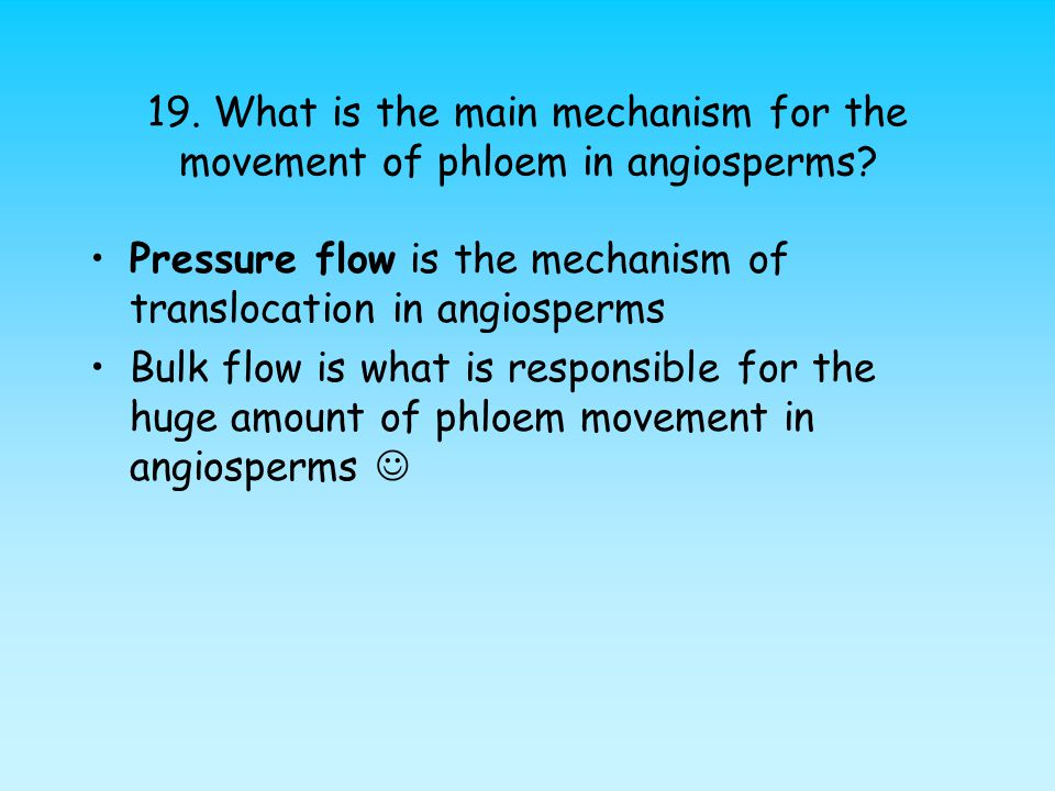 19. What is the main mechanism for the movement of phloem in angiosperms