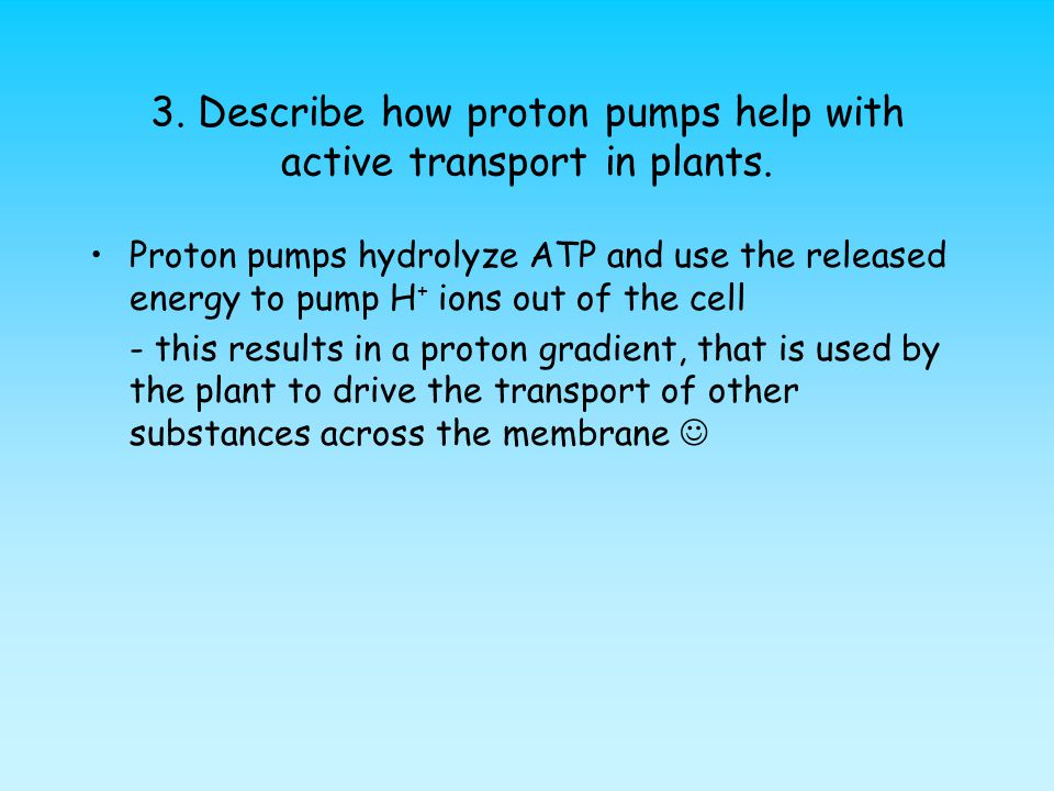 3. Describe how proton pumps help with active transport in plants.
