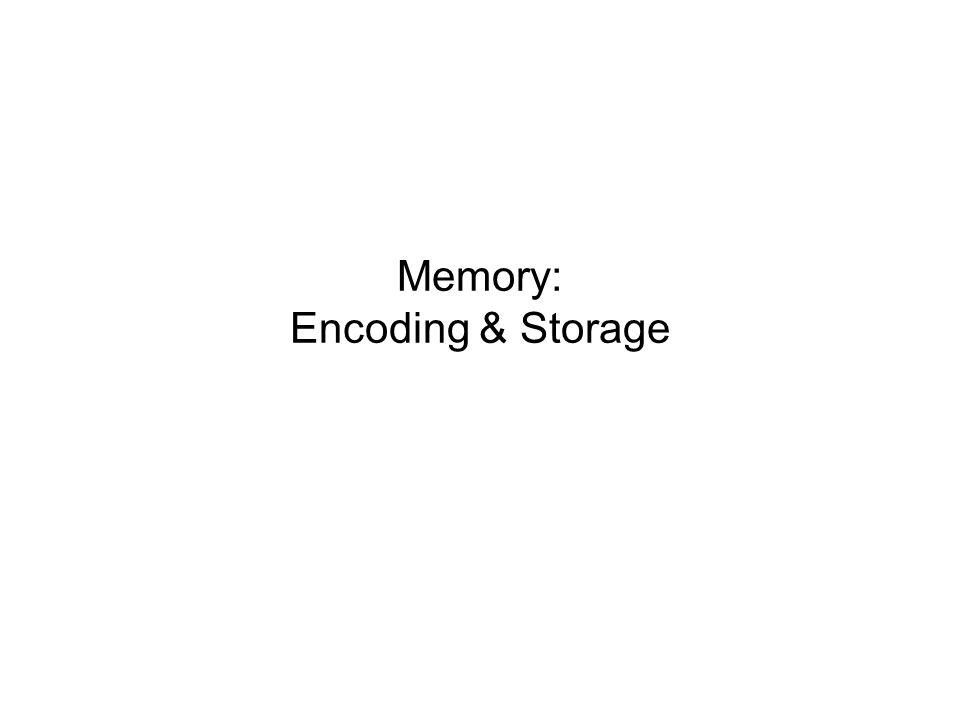 Memory: Encoding & Storage