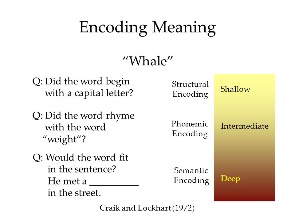 Encoding Meaning Whale Q: Did the word begin with a capital letter