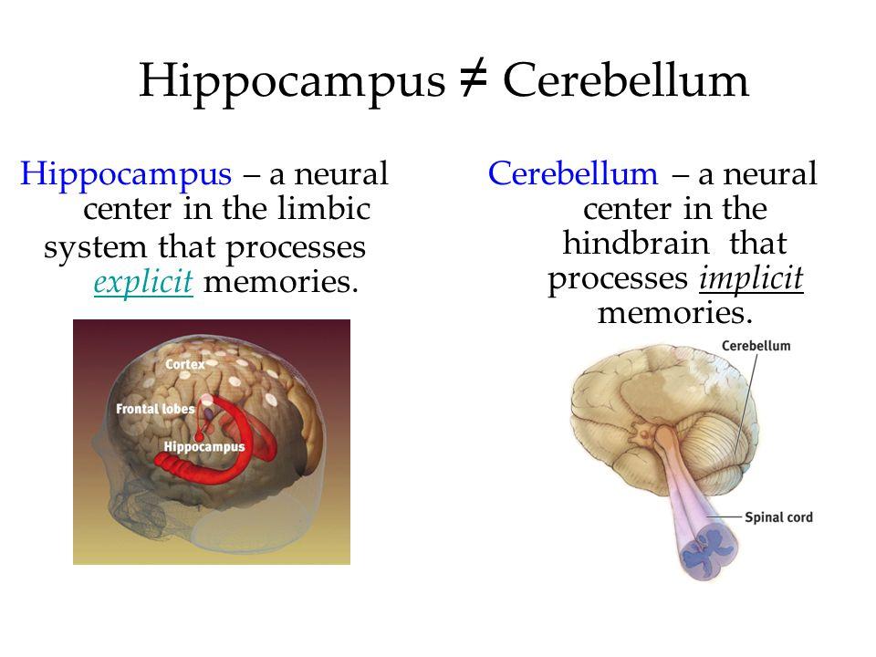 Hippocampus ≠ Cerebellum