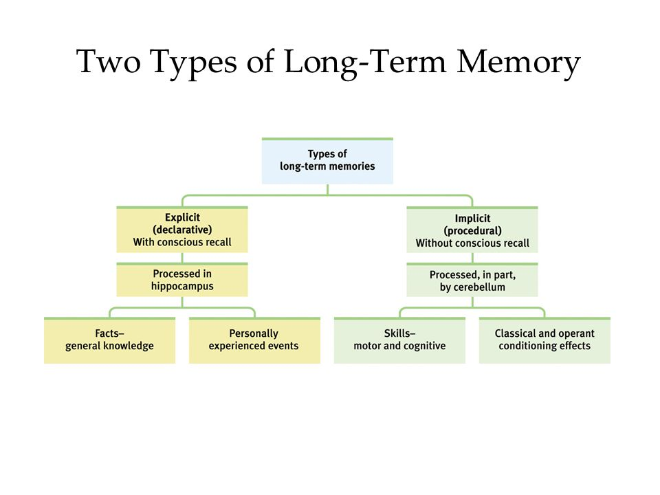 Two Types of Long-Term Memory