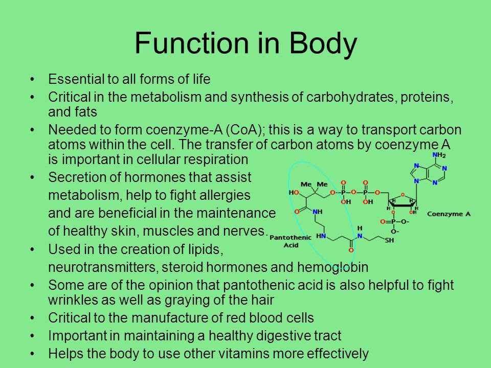 Function in Body Essential to all forms of life