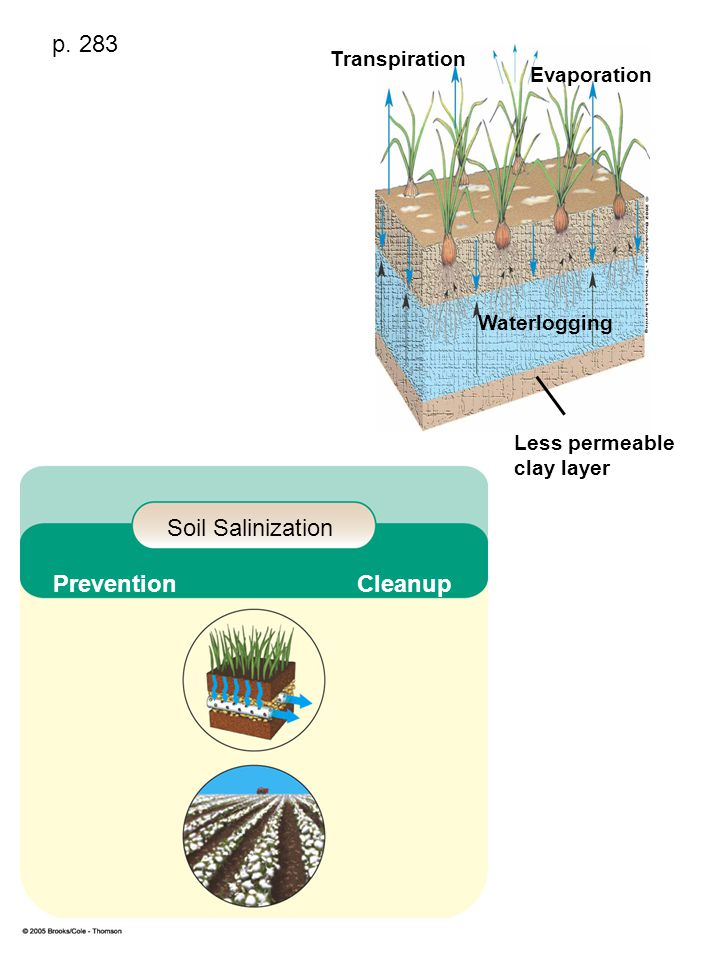 p. 283 Soil Salinization Prevention Cleanup Transpiration Evaporation