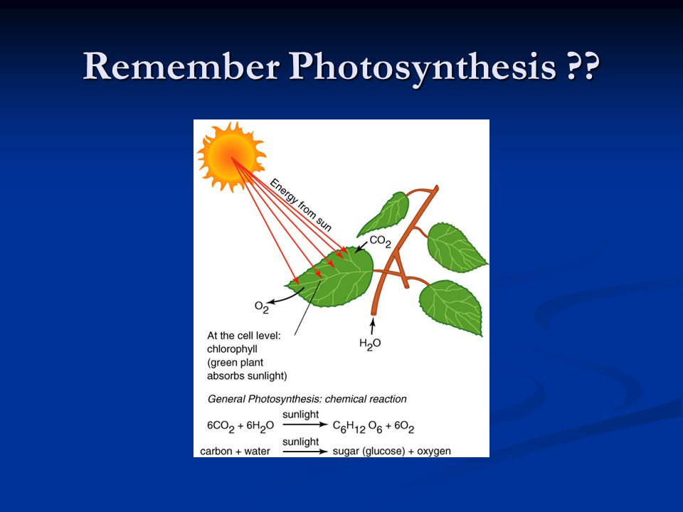 Remember Photosynthesis
