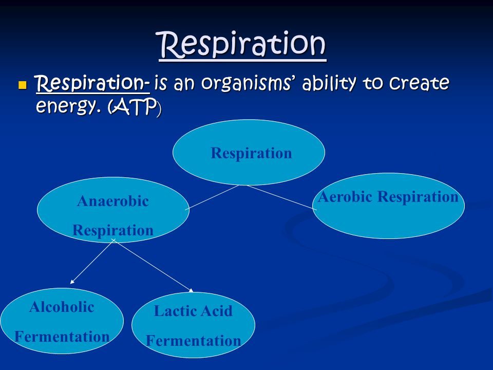 Respiration Respiration- is an organisms' ability to create energy. (ATP) Respiration. Aerobic Respiration.