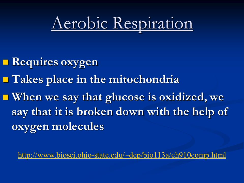Aerobic Respiration Requires oxygen Takes place in the mitochondria