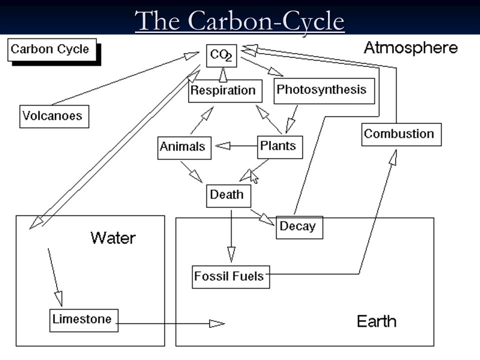 The Carbon-Cycle