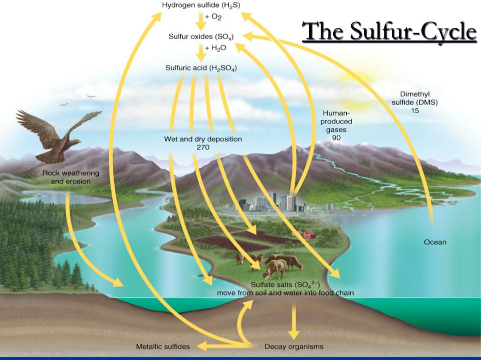 The Sulfur-Cycle