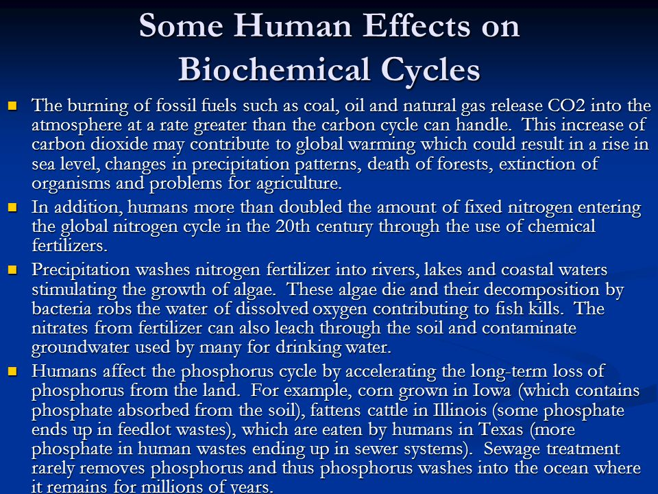 Some Human Effects on Biochemical Cycles