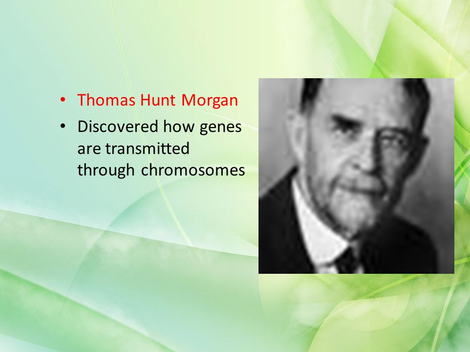 Thomas Hunt Morgan Discovered how genes are transmitted through chromosomes