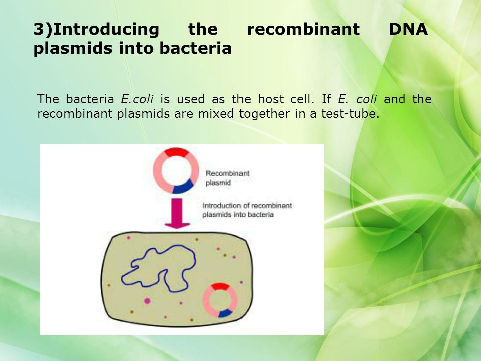 3)Introducing the recombinant DNA plasmids into bacteria