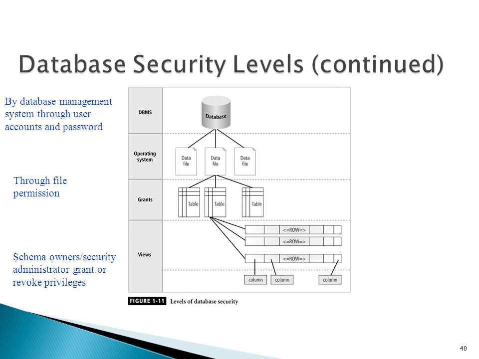 Database Security Levels (continued)