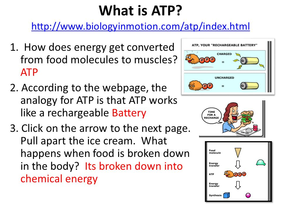 What is ATP http://www.biologyinmotion.com/atp/index.html