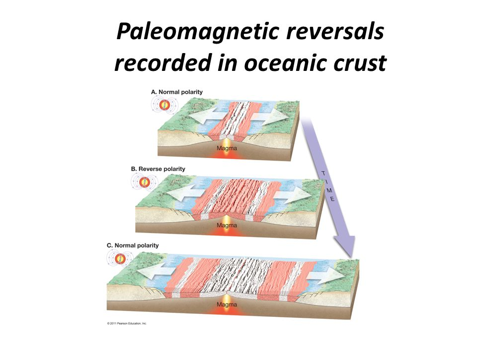 Paleomagnetic reversals recorded in oceanic crust