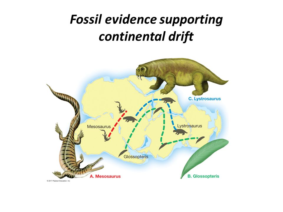 the evidence in support of the theory of continental drift essay In 1912, the year of his continental-drift presentations, wegener again answered   drift, marshaling all the scientific evidence he could find to support his theory.