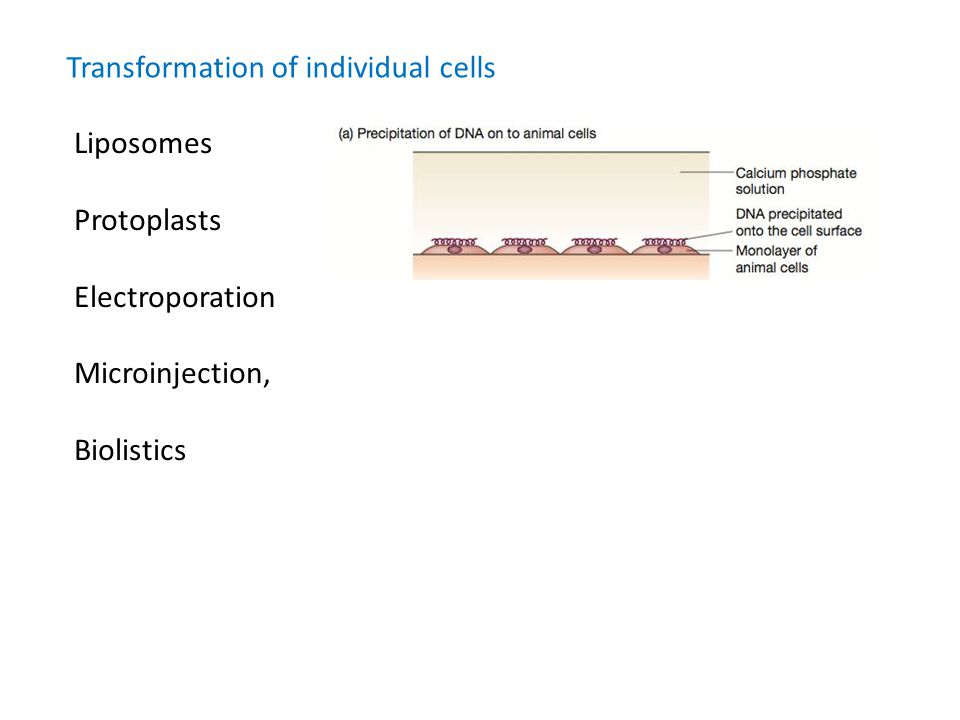 Transformation of individual cells