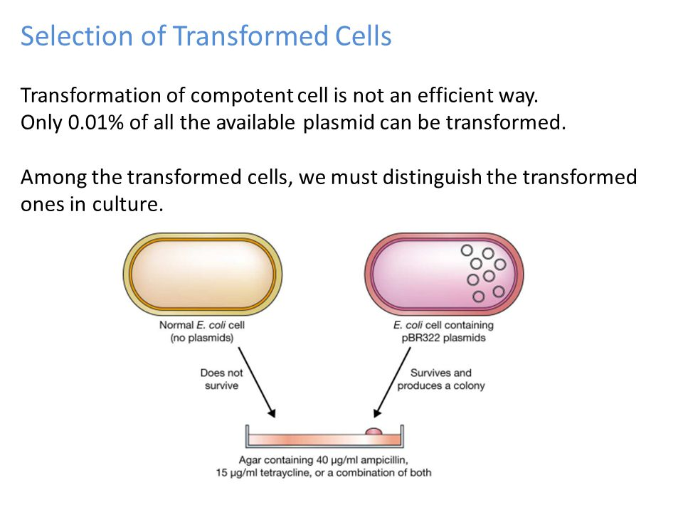 Selection of Transformed Cells