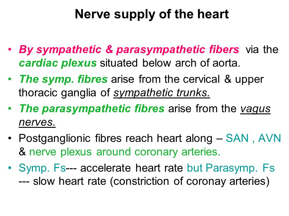 Nerve supply of the heart