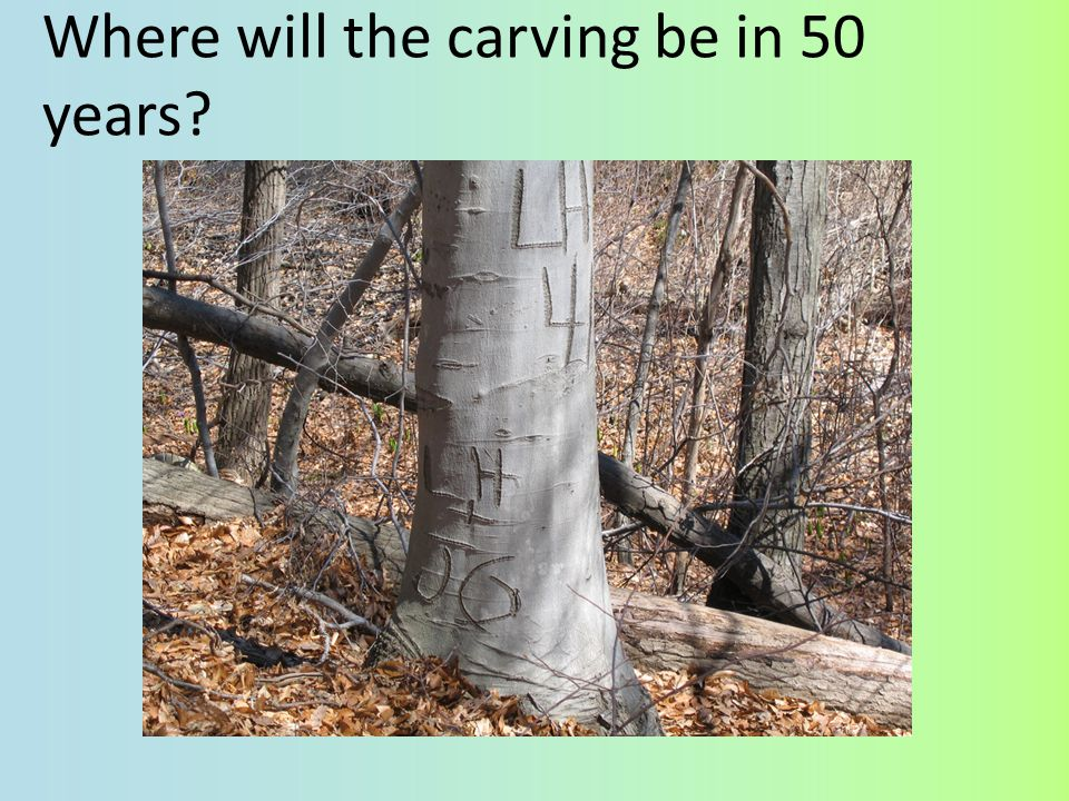 Where will the carving be in 50 years