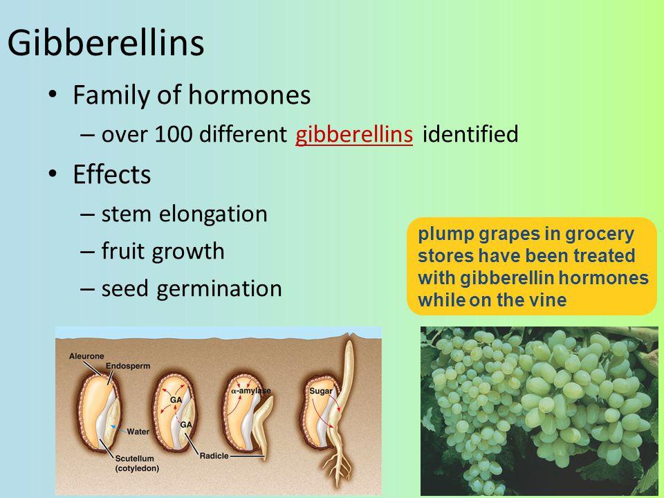 Gibberellins Family of hormones Effects