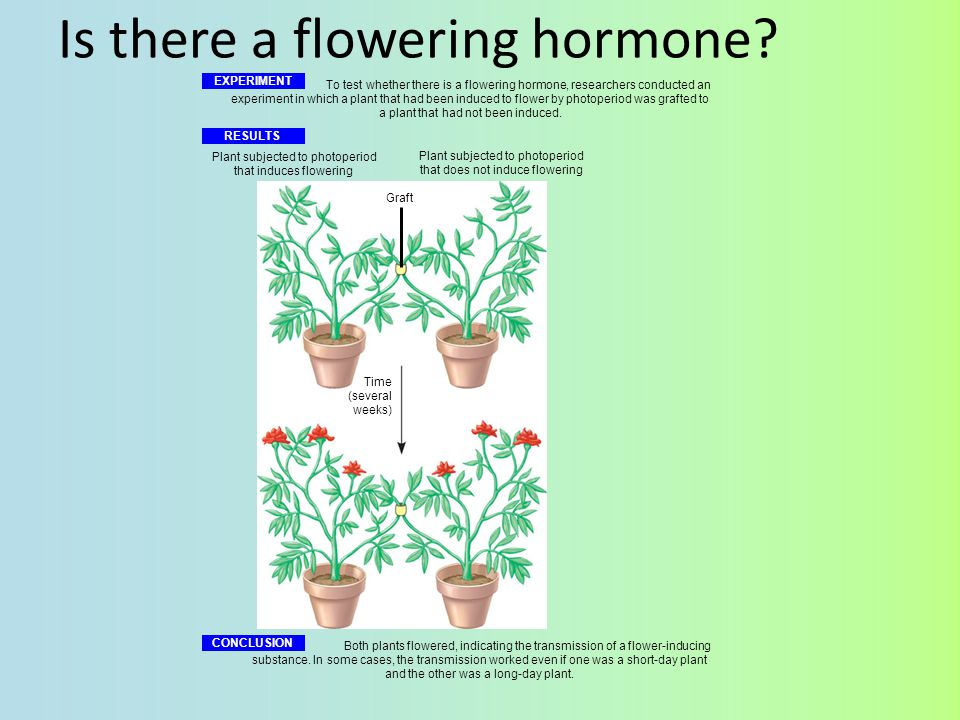 Is there a flowering hormone