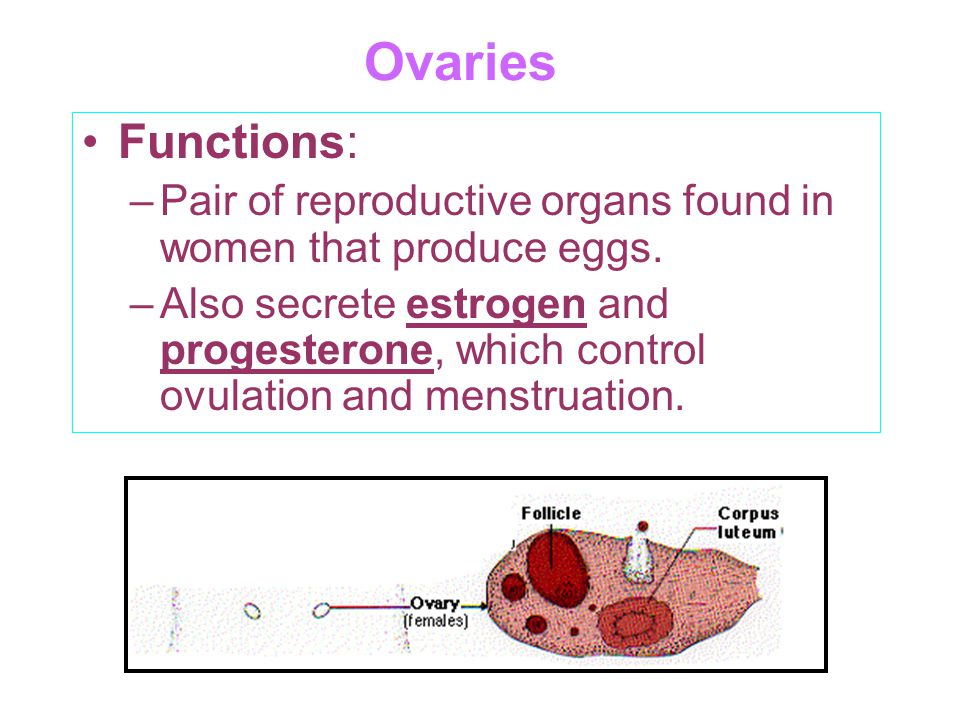 Ovaries Functions: Pair of reproductive organs found in women that produce eggs.