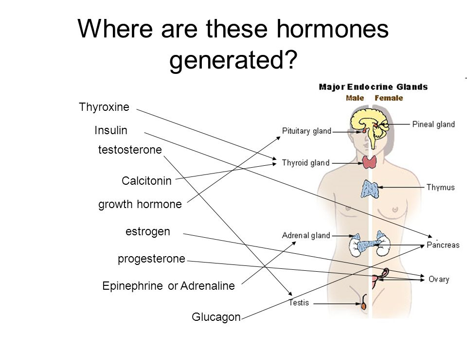 Where are these hormones generated