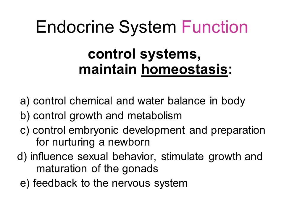 Endocrine System Function