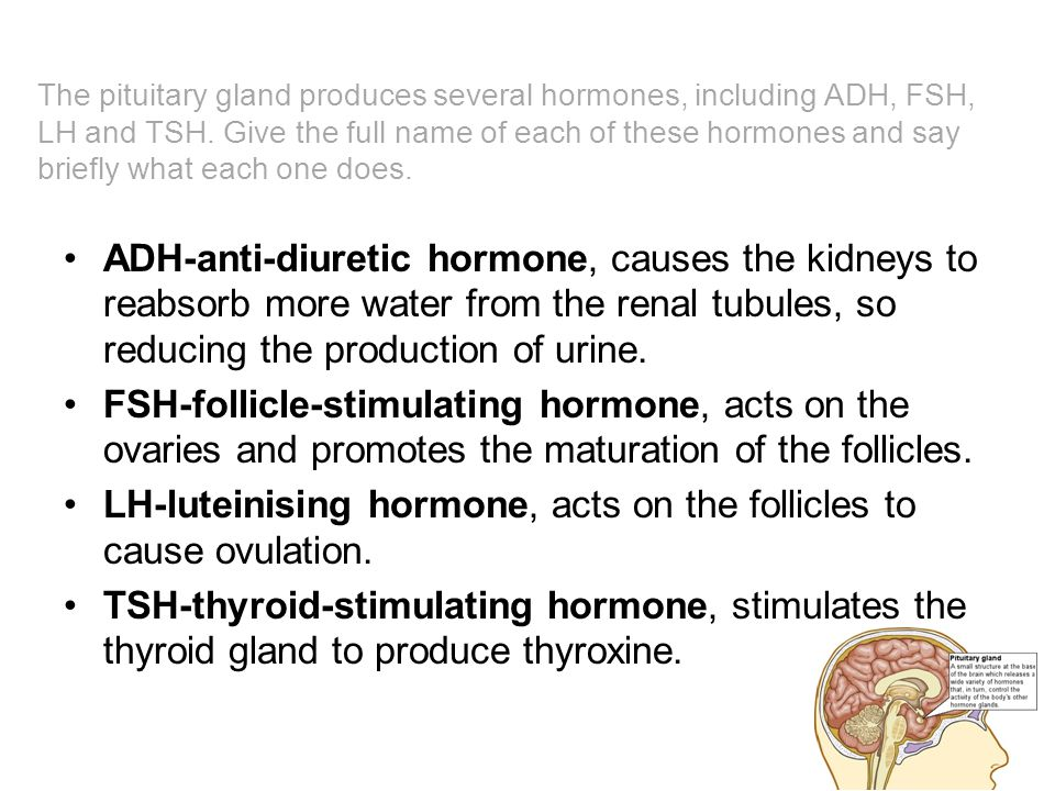 LH-luteinising hormone, acts on the follicles to cause ovulation.