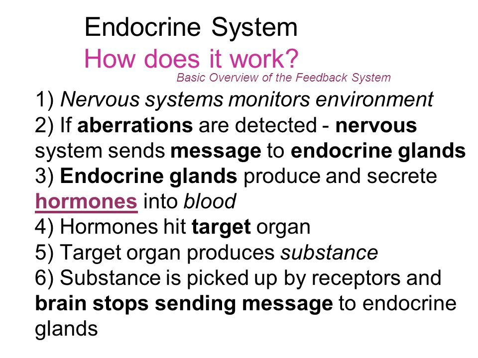 Endocrine System How does it work