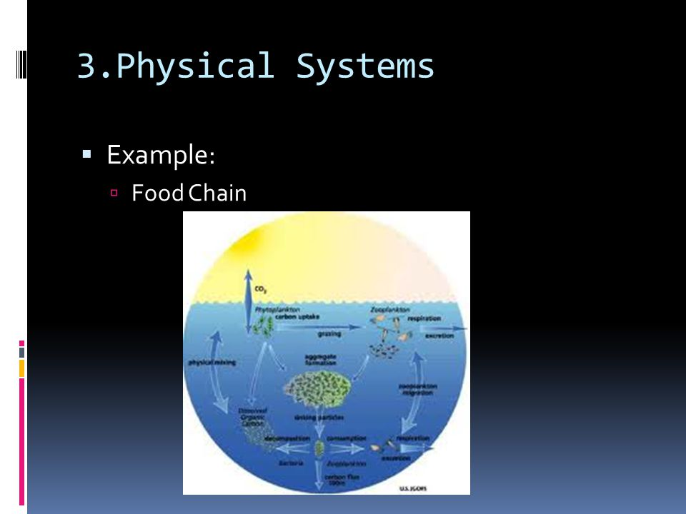 3.Physical Systems Example: Food Chain
