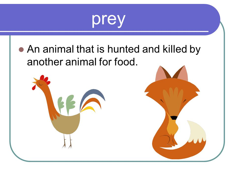 prey An animal that is hunted and killed by another animal for food.