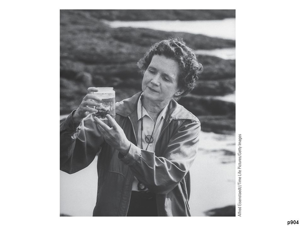 Author Rachel Carson (1907–1964) Some call her the
