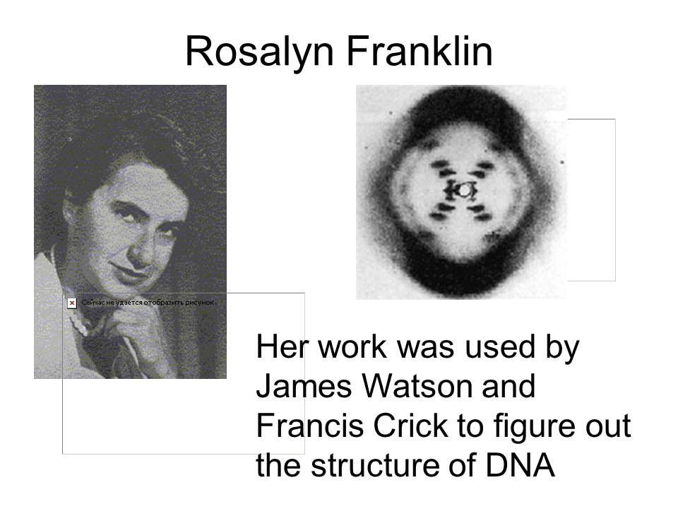 Rosalyn Franklin Her work was used by James Watson and Francis Crick to figure out the structure of DNA.