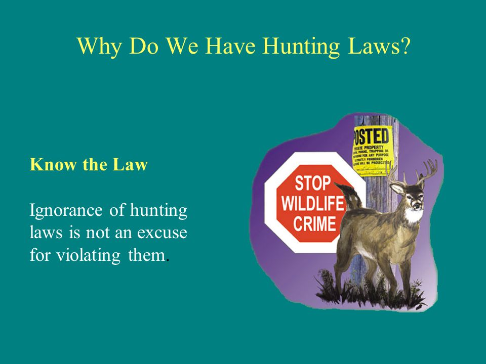 Why Do We Have Hunting Laws