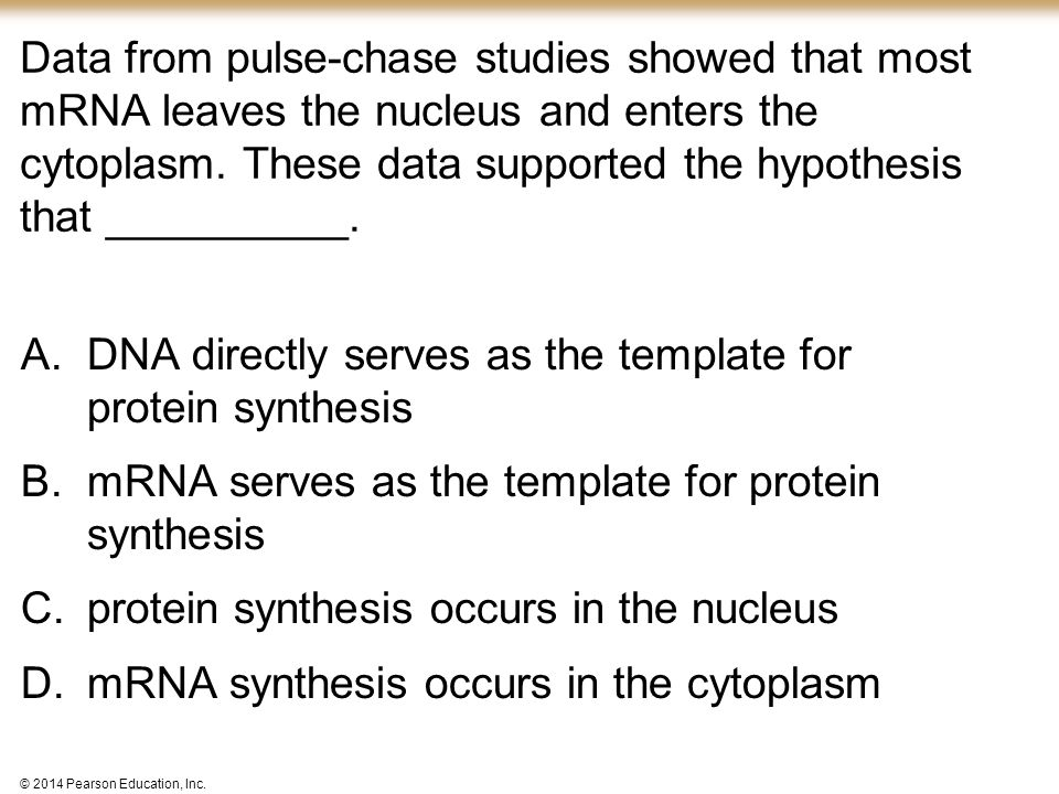 DNA directly serves as the template for protein synthesis