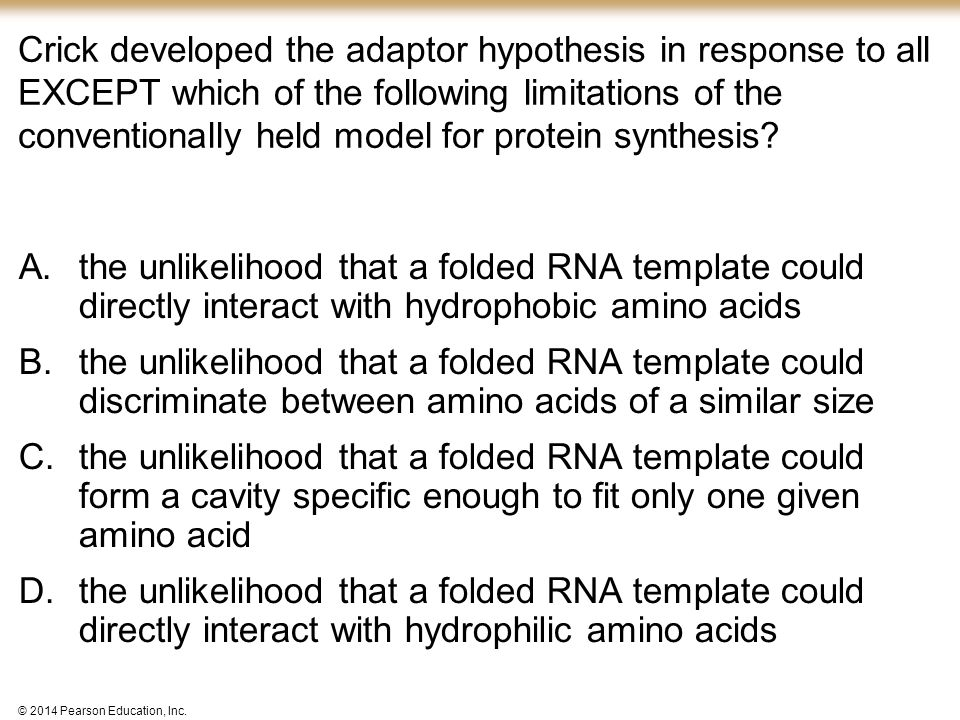 Crick developed the adaptor hypothesis in response to all EXCEPT which of the following limitations of the conventionally held model for protein synthesis
