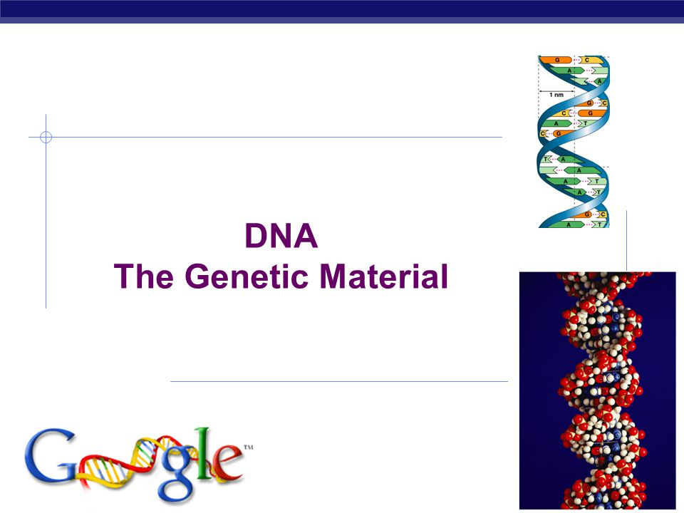DNA The Genetic Material