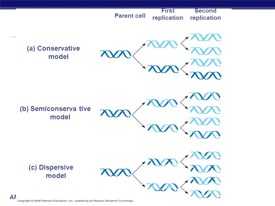 (a) Conservative model (b) Semiconserva tive model