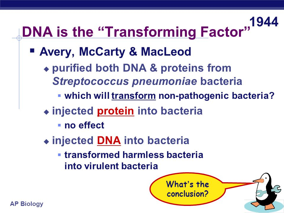 DNA is the Transforming Factor