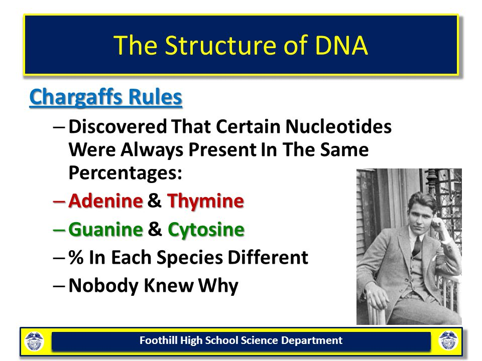 The Structure of DNA Chargaffs Rules
